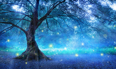 fairy forest free fotolia
