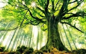 healthy root chakra tree
